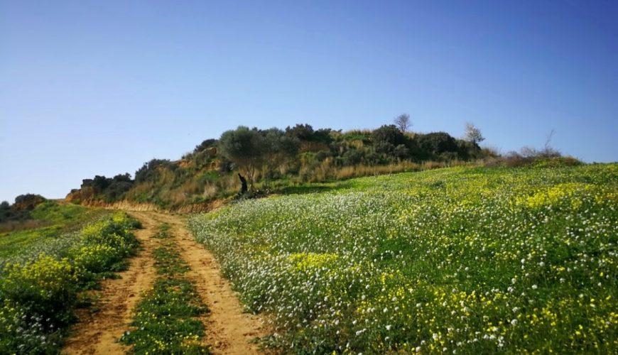 secrets of ancient akragas tour